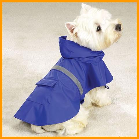 animal  Dicas de Como Vestir Seu Cão