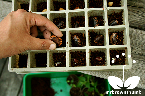 Eco-seed starter Burpee Seed Company