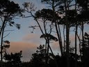 Asilomar beauty at Sunset