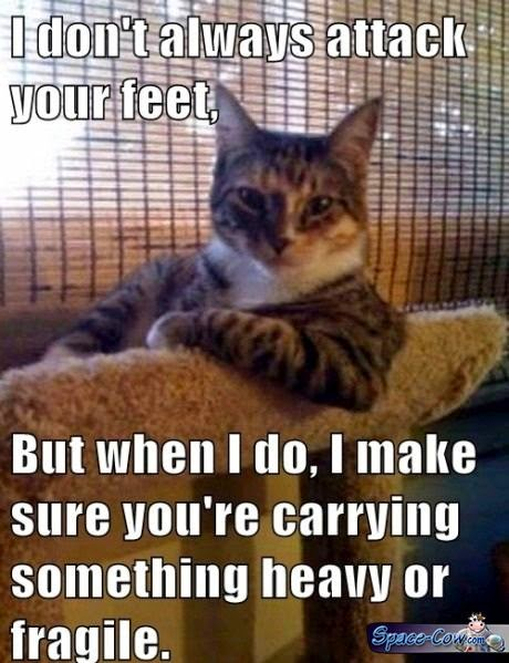 funny cat image humor