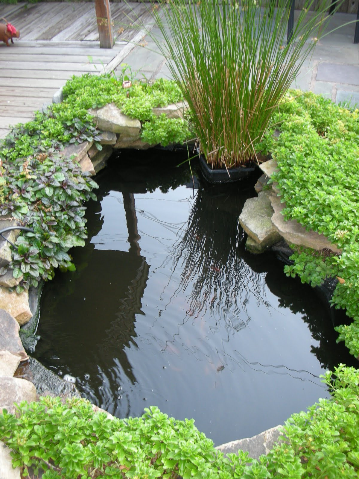 Swoon style and home slice of life the koi fish pond for Koi pond design layout