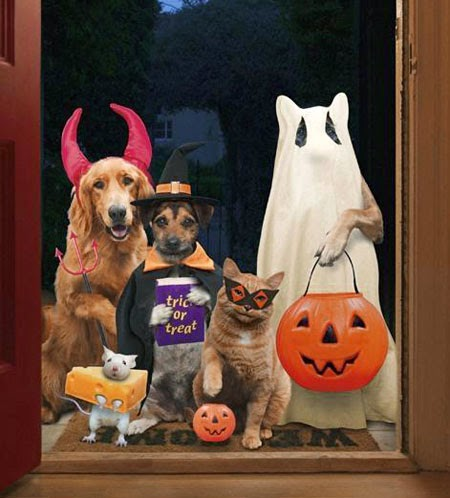 Funny halloween animals2-2