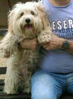 Χαθηκε στο Μαρουσι αρσενικο σκυλάκι με μπολικο τριχωμα