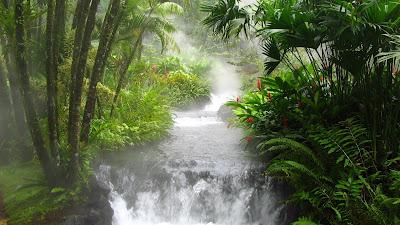 La selva con un río impresionante de agua clara