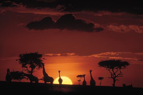 Masai Mare Africa