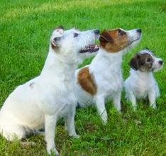 veterinaria online etapas en la vida del perro