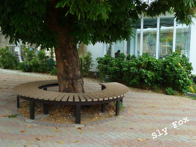 台南大學龍眼樹