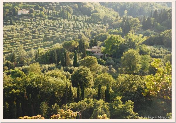 Psynopsis Tuscany Sunrise