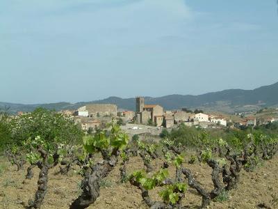 Latour de France overlooking Grenache gris vines  Domaine de L'Ausseil