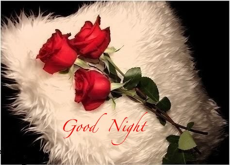 Dania Ji SMS & Shayari: Good Night SMS