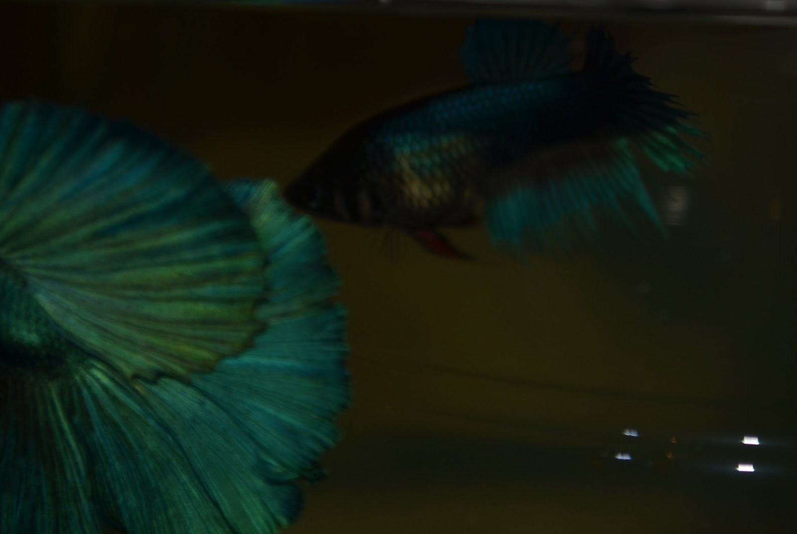 Adelaide betta july 2013 lilly looking ready and interested nvjuhfo Choice Image