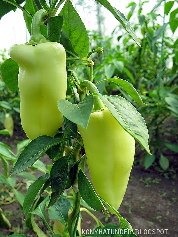 peppers_getting_ripe