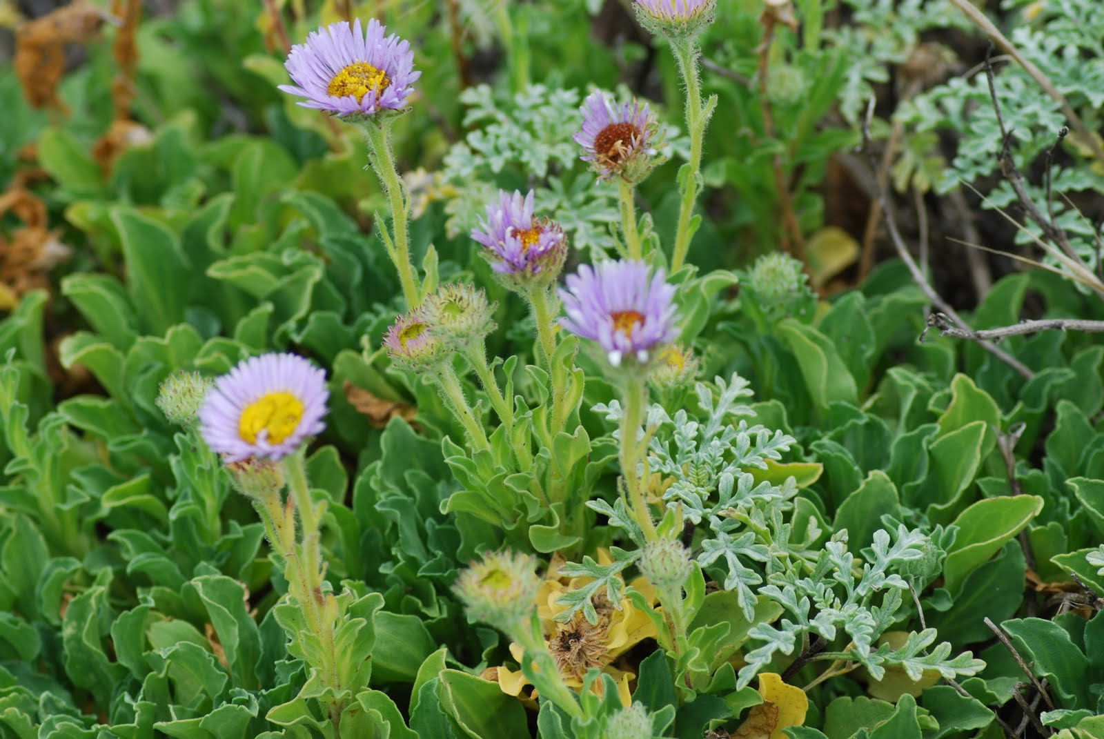 Root For Peace California Native Plants