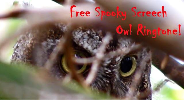 Free Spooky Eastern Screech Owl Ringtone