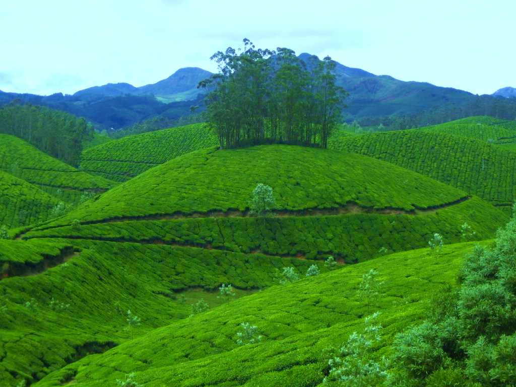 Munnar Honey Moon Destination Tourist Attractions In Munnar Honey Moon In Kerala Munnar
