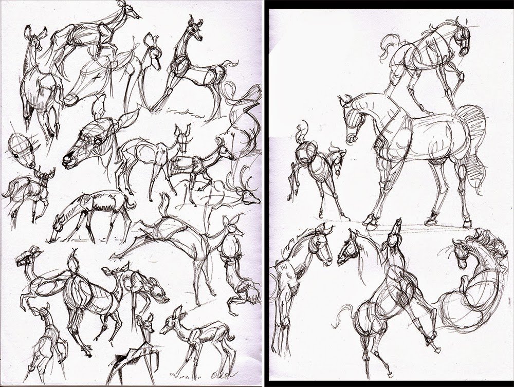 Hamo\'s Art Blog: Horse and Deer Anatomy sketches