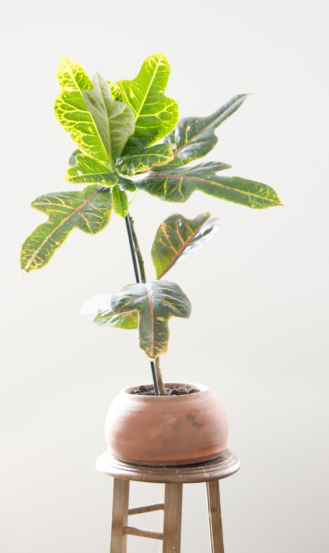 5 plantas fáciles de cuidar