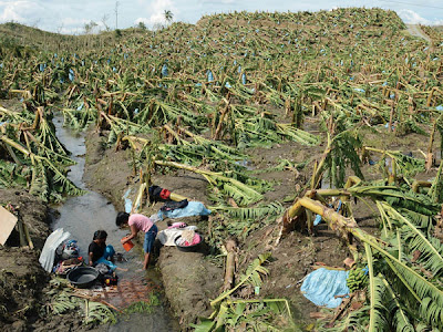 Pablo Wiped-out Banana plantation at Compostela Valley