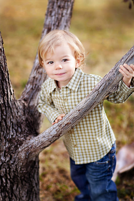 Little Boy poses in tree during child photography session
