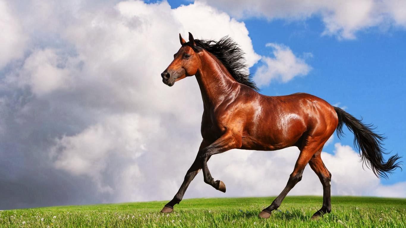 Beautiful   Wallpaper Horse Laptop - runninghorse03  Graphic_13834.jpg