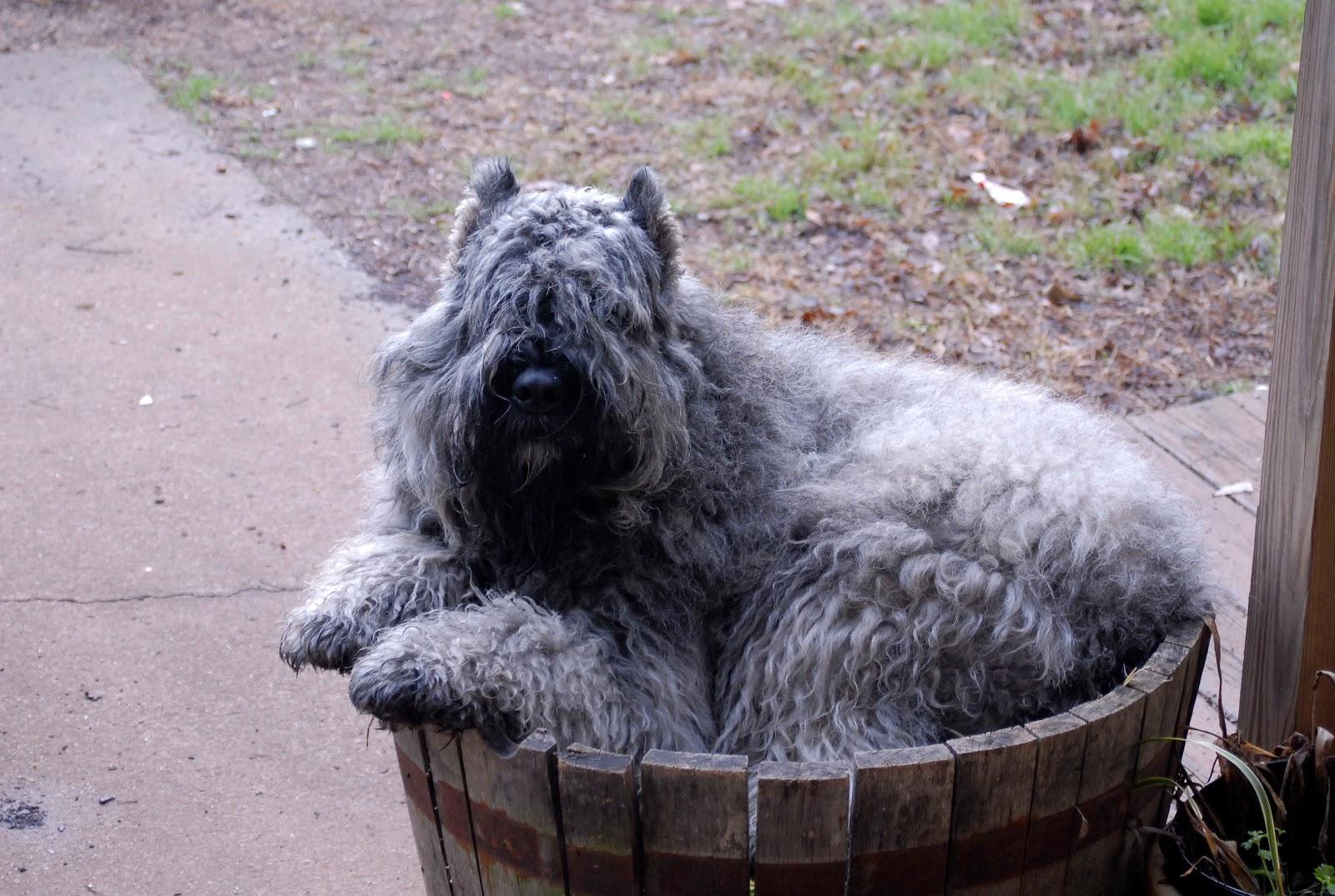Flanders Dog Park