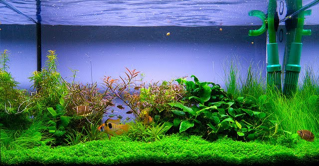 Macro And Micro Nutrients For Aquascape Aquarium Plants