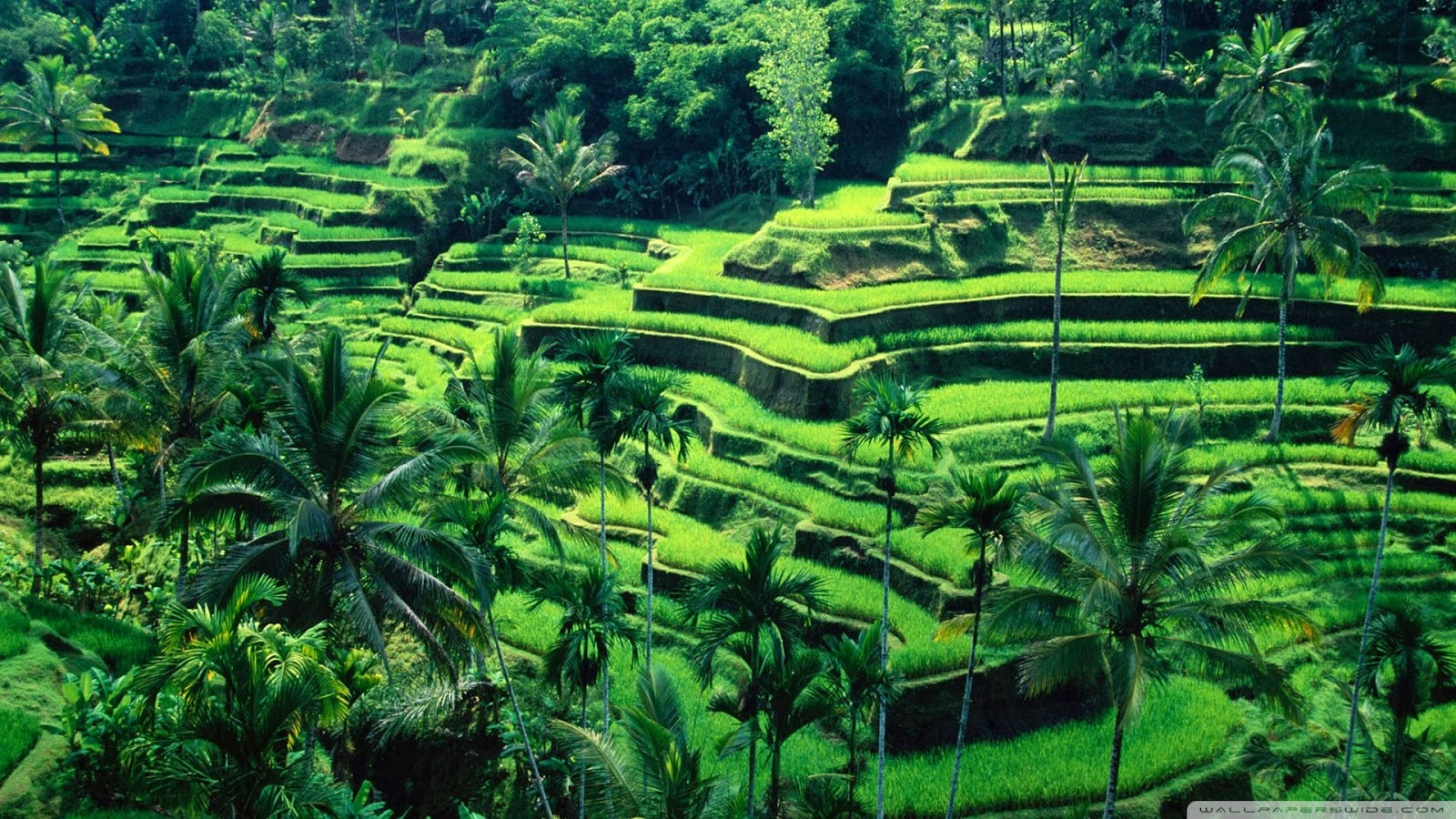 Potensi Sektor Pertanian Di Indonesia Menebar Manfaat Degan Ilmu