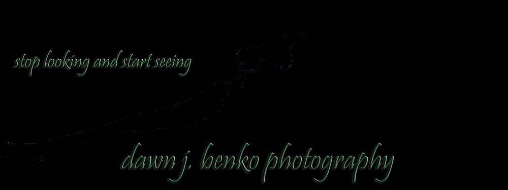Dawn J. Benko Photography