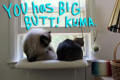 big butt cat 02