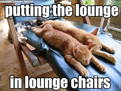 cat on lounge chair