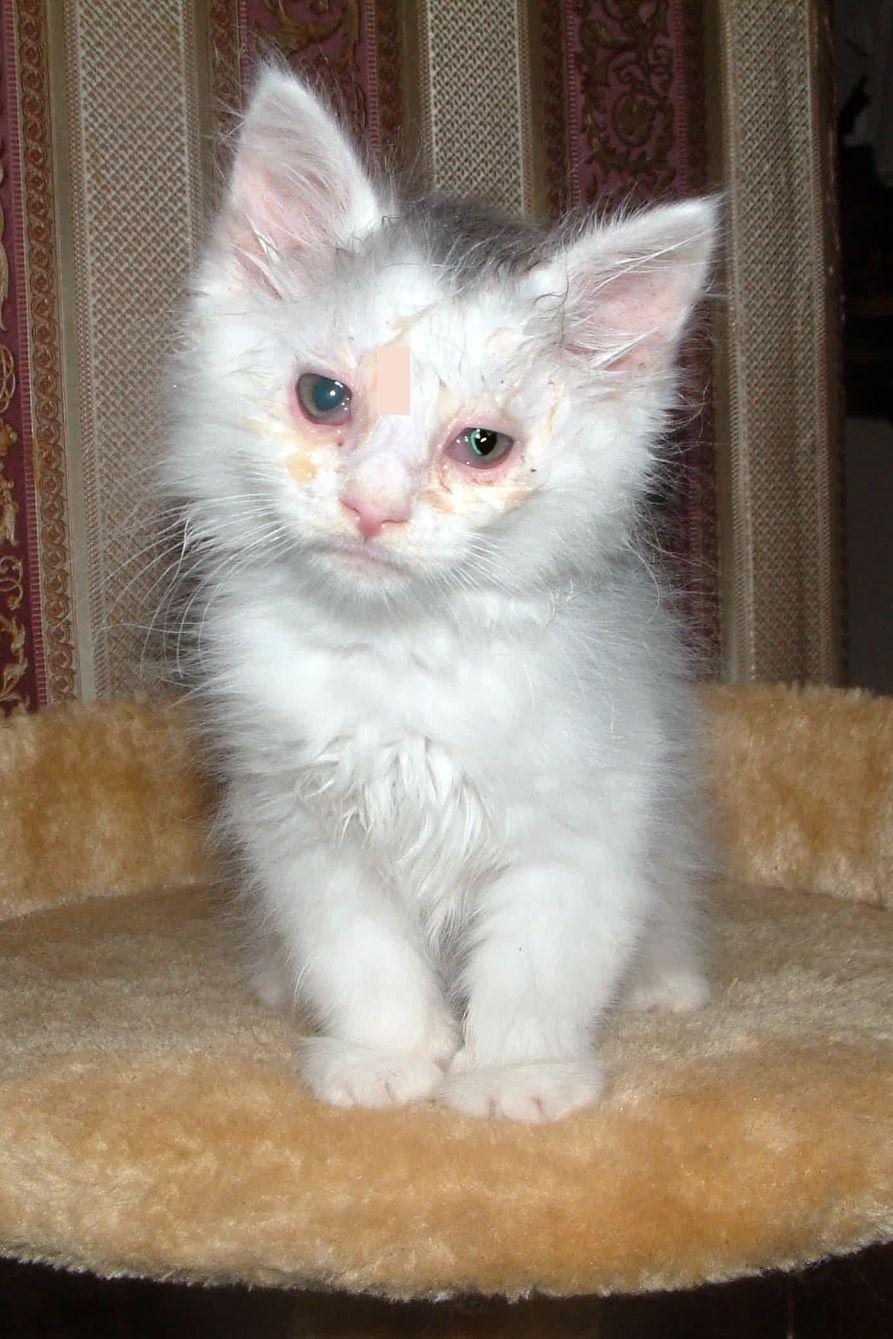 cat feeding tube