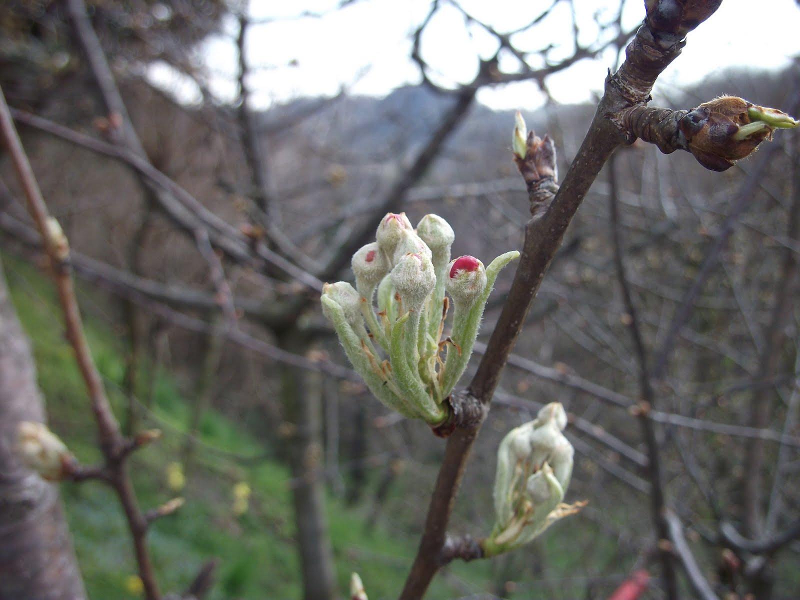 ....primavera!!