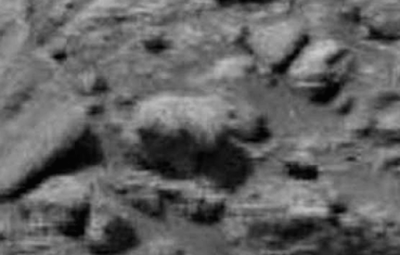 Bear Like Creature Found Walking On Mars 2015, UFO Sightings