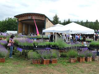 Lavender in the Park