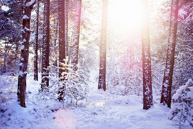 Suedia iarna