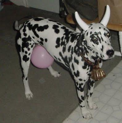 Dog Bull Costume