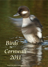 Birds In Cornwall 2011 DVD  -  OUT NOW