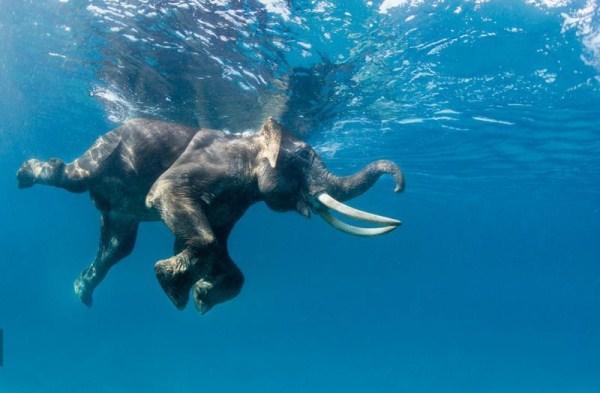 Ark For Animals Aqua