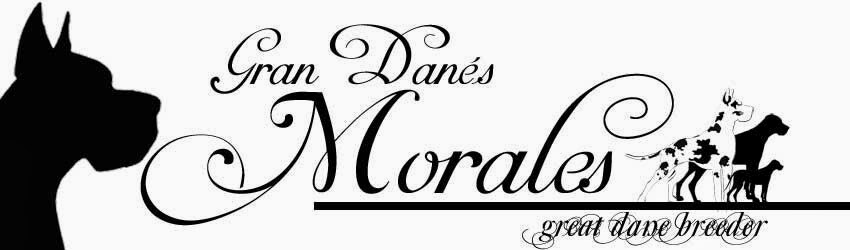 GRAN DANES MORALES