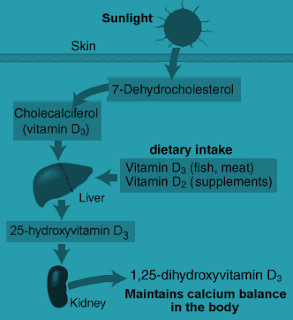 synthesise vitamin Vitamin c is a water-soluble vitamin and does not carry the same risks of overdose toxicity that fat-soluble vitamins (like vitamin a) carry, so doubling down through a multivitamin and through diet may not be a bad idea.