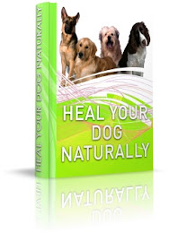 Natural Cure for Yeast Infection in Dogs by Dr.  Sara Rooney