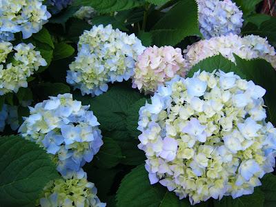 Các loài hoa đẹp 04