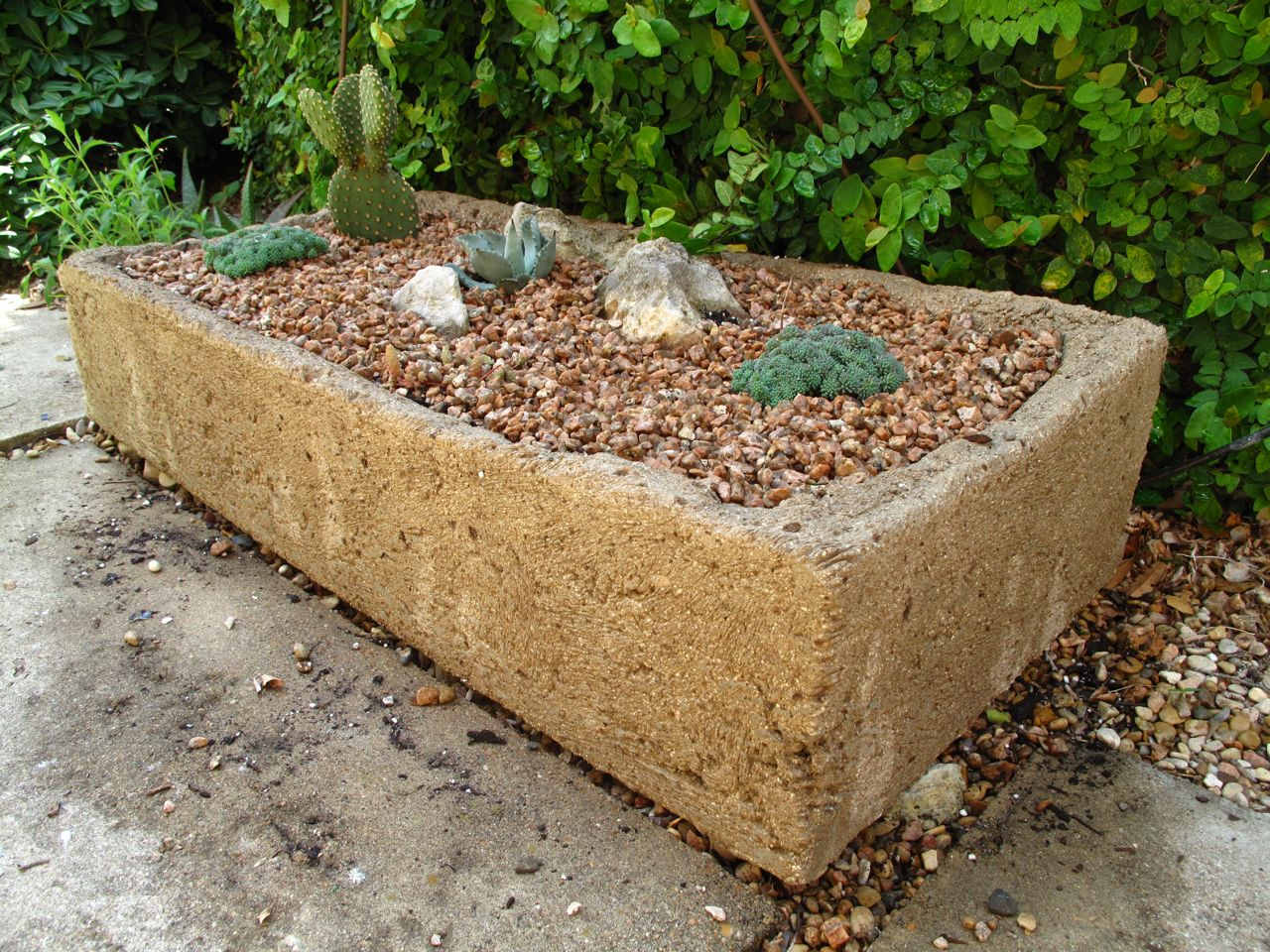 ROCK ROSE: NEW HYPERTUFA TROUGH GARDEN