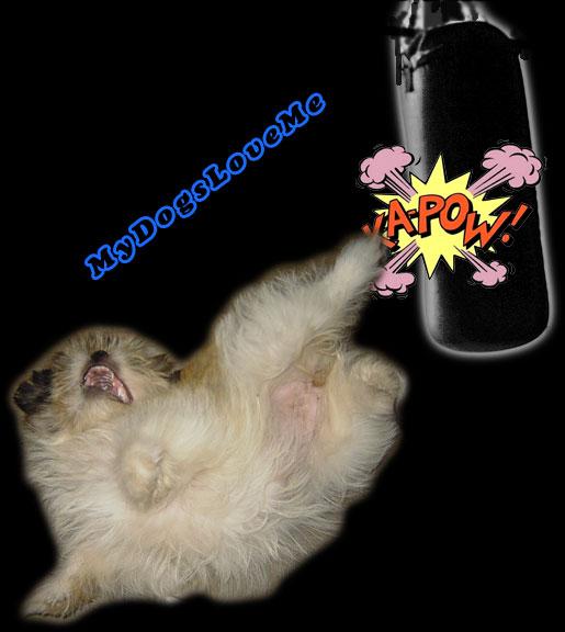 [Image: funny-dog-shih-tzu-ninja-kick.jpg]