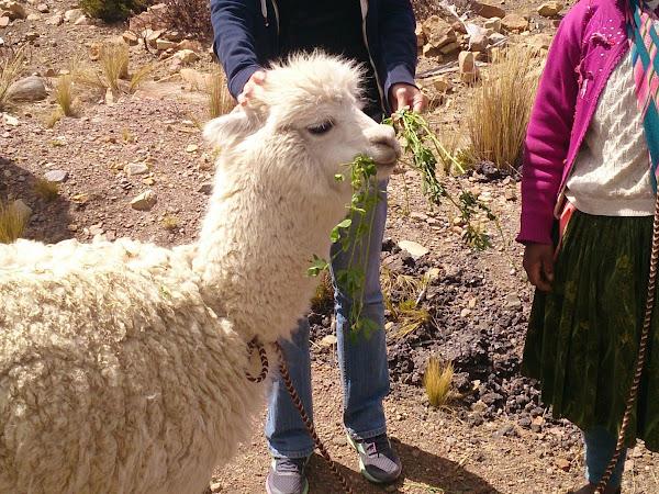Du côté du Pérou...# 1 : Lima, Paracas, Nasca, Arequipa, Chivay