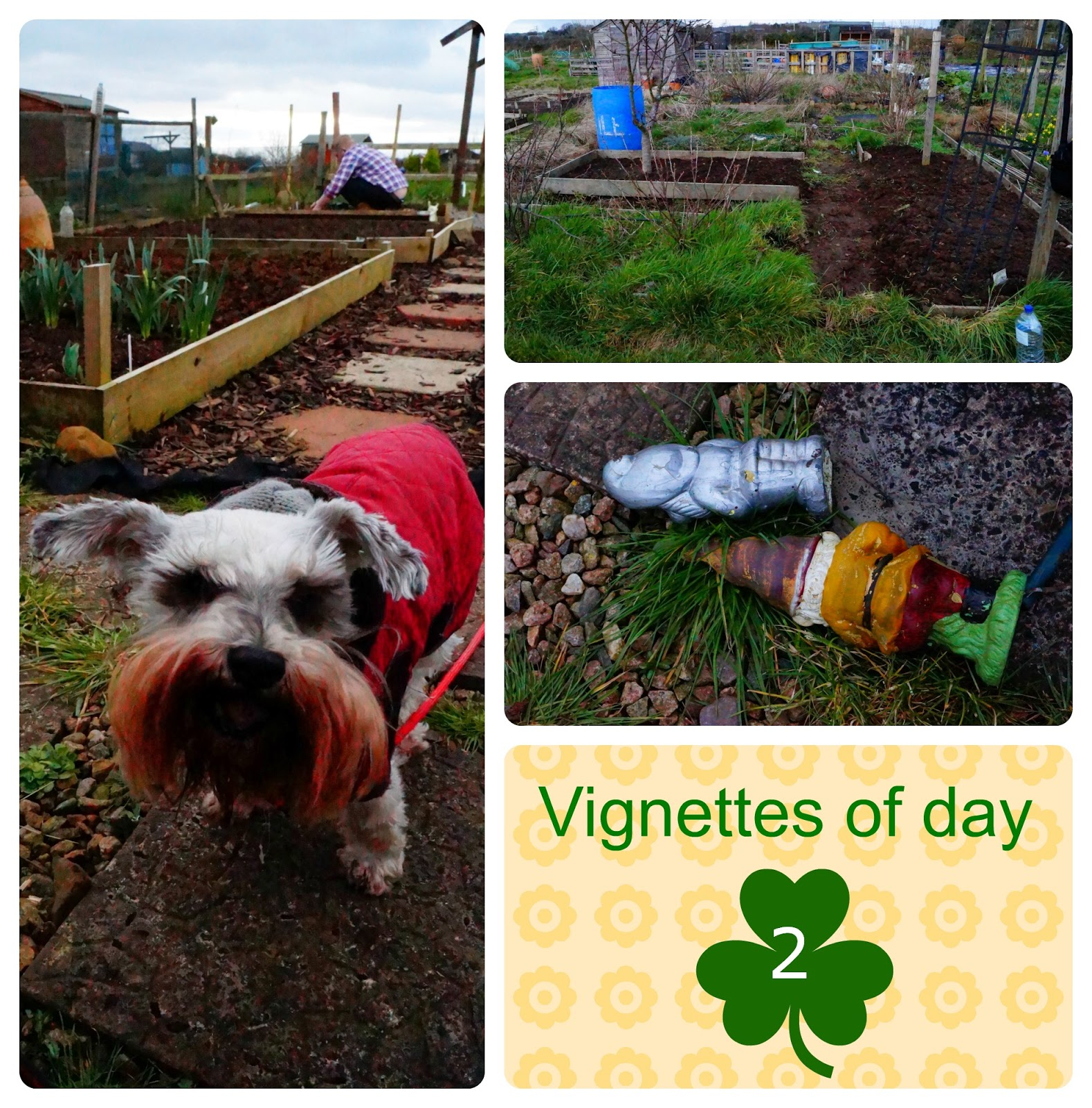 vignettes of day 2 - 'growourown.blogspot.com' ~ allotment blog