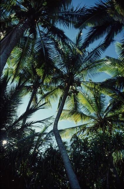 palm trees tropical ocean beach hawaii
