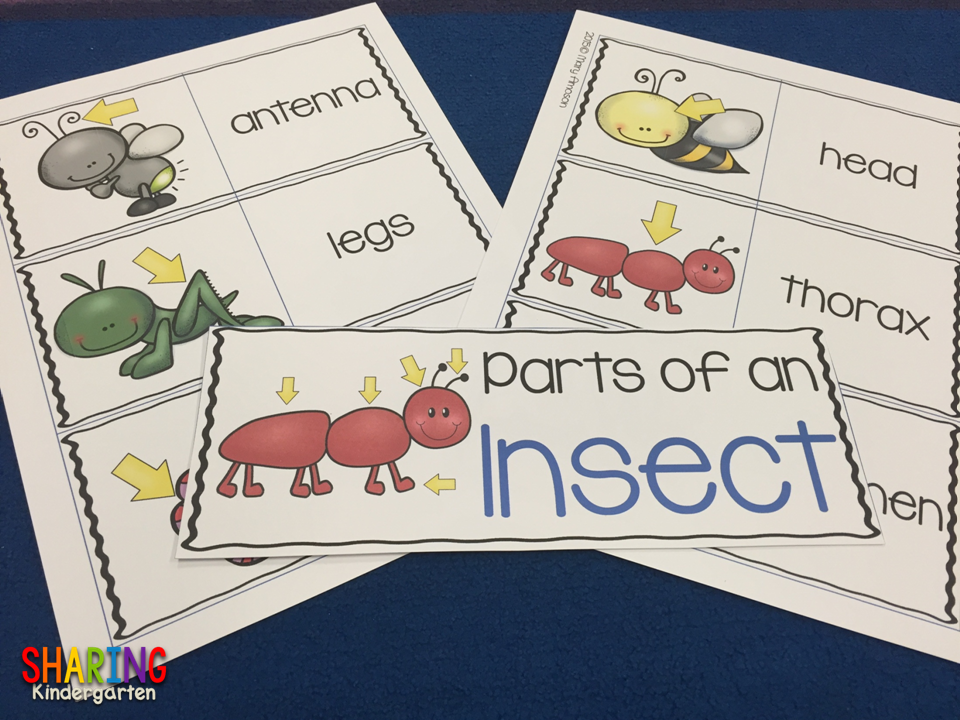 https://www.teacherspayteachers.com/Product/Insects-Print-Play-Pack-1829415