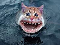 Shark_Cats_mutant_wallpapers
