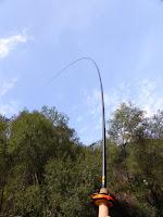 A 3lb Idrijca rainbow trout puts a good bend the the Honyru